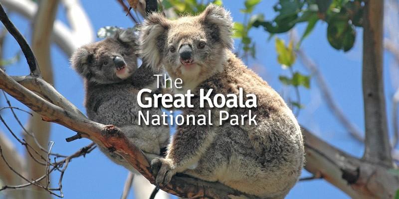 Great Koala National Park
