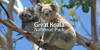 Great Koala National Park