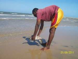 Sea Turtle Release - Copy